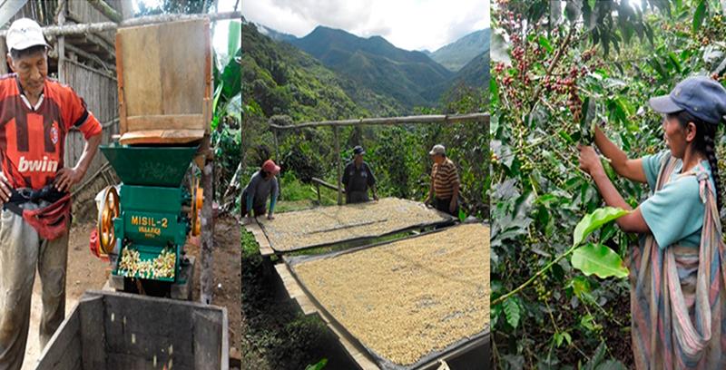 Promoción de la agricultura familiar sostenible y de la economía social para un mundo más justo