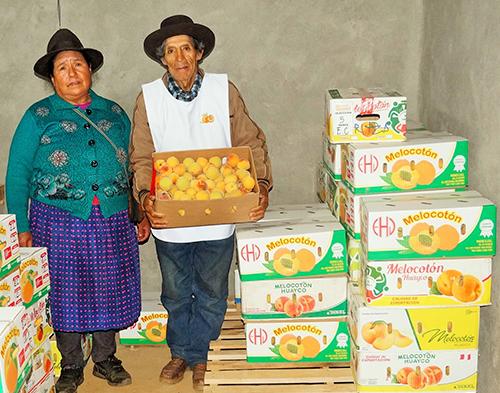 Proyecto productivo sostenible de durazno en la Provincia de Huamalíes - Huánuco