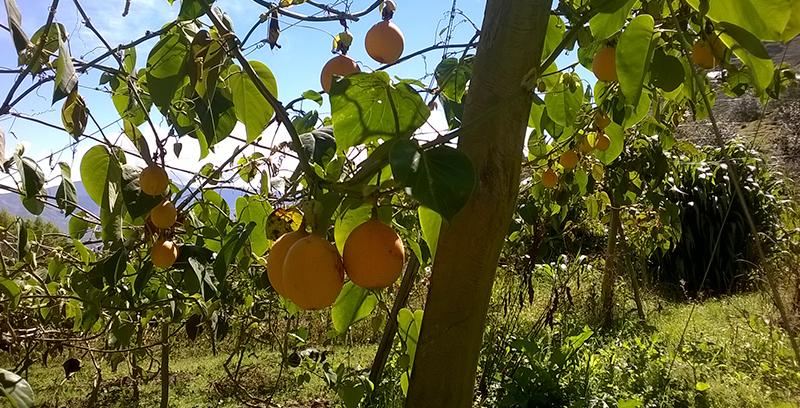 Programa SIA - Programa común de promoción de la agricultura familiar sostenible y de la economía social para un mundo más justo