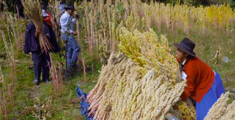 Mejoramiento de la seguridad alimentaria y la adaptación al cambio climático en los Andes Peruanos-MESAACC
