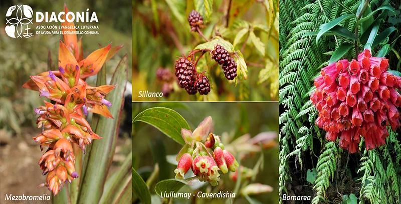 Mejoramiento de la resiliencia del bosque Monte Potrero y provisión de servicios ecosistémicos para la comunidad de Umari